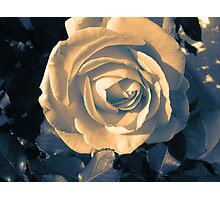 Peaceful Rose Photographic Print