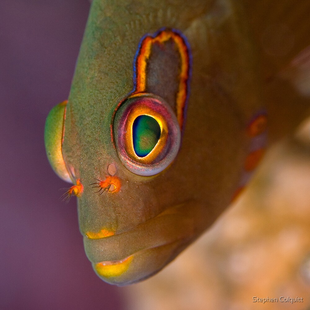 Look into my eyes by Stephen Colquitt