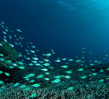 Reef scene panorama by Stephen Colquitt