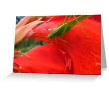 Little Green Grass Hopper Greeting Card