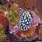 Kian Nudibranch by Michael Powell
