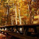 Autumn Picnic by Lois  Bryan