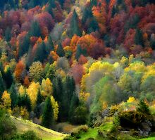 Palette Nature by Philippe Sainte-Laudy