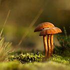 Sunset mushroom by Taka