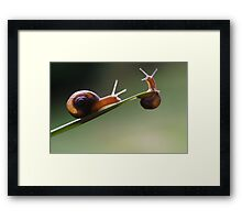 hang on little buddy....i'll save you Framed Print