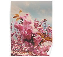 CherryBlossom Poster