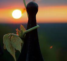 I am the vine by RDJones