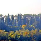 Misty Morning in Tuscany by Lesliebc