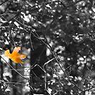 So Long Sweet Summer by Joel Hall