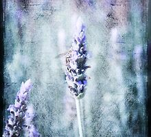 Vintage Lavender by Elaine Teague