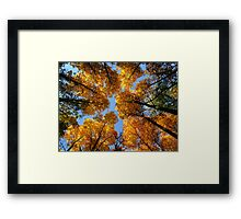And the canpoy, how it glows from below Framed Print