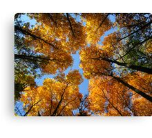 And the canpoy, how it glows from below Canvas Print