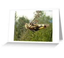 Bug on my Windshield Greeting Card