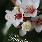 Thankyou Card-Blossom by picketty