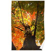 Colors colors colors Poster