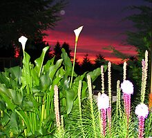 Lillies At Sunrise by MsLiz