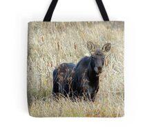 Young bull moose Tote Bag