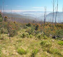 Wonnangatta Wilderness by pslambe