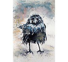 Crow after rain Photographic Print
