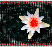 Christmas Water Lily     116 Views by Rosalie Scanlon