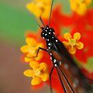 Queen Spots II by Donna Adamski