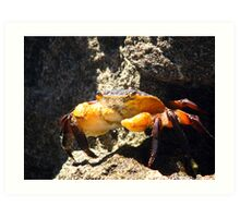 Handsome Crab Art Print