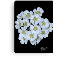 BRADFORD PEAR BLOSSOMS in WATER COLOR Canvas Print
