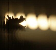 Dragon Shadows by Maria Bonnier-Perez