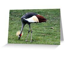 African Crane Greeting Card