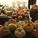 Pumpkins at the Sosnowski Farm Stand   Top 10 award by Jack McCabe