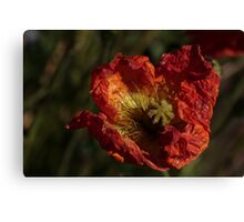 Blister In The Sun Canvas Print
