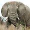 The Elephant Challenge
