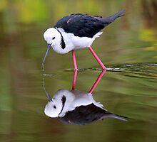 Stilt reflections!! by jozi1