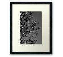 Untitled.00046 Framed Print