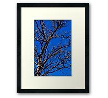 Untitled.00033 Framed Print