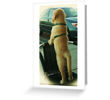 Where are all the girls.... Greeting Card