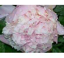 Raindrop Peony Photographic Print