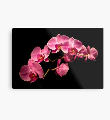 Pink Orchids on Black Background Metal Print