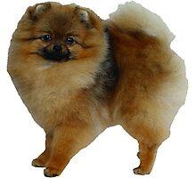 Chow Chow Dog! Photographic Print