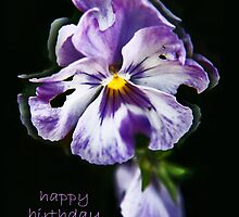 Pansy Birthday Card For Mum by smokipokicards