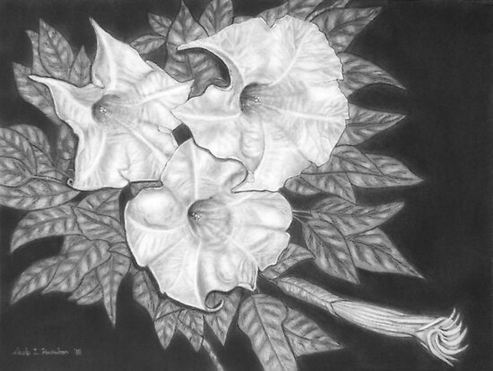 Trio of Heavenly Blossoms by Nicole I Hamilton