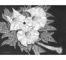 Trio of Heavenly Blossoms Photographic Print