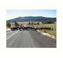 Typical cattle drive in Eastern Oregon Art Print