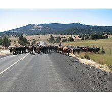 Typical cattle drive in Eastern Oregon Photographic Print