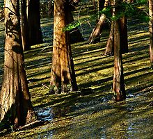 Shadows on the Bayou by cclaude