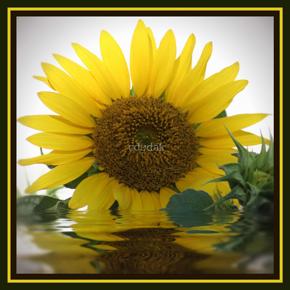 FLOODED SUNFLOWER by cdudak