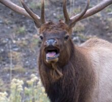 Bull Elk Bugling Sticker