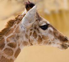 Giraffe by André Gonçalves