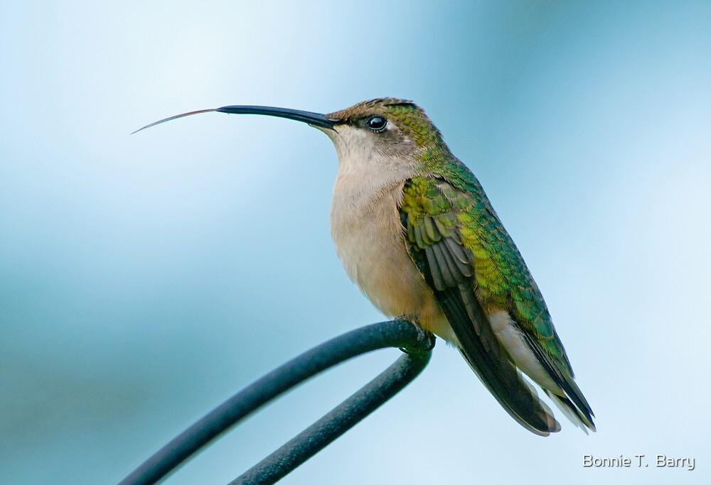 Hummingbird Tongue by Bonnie T.  Barry