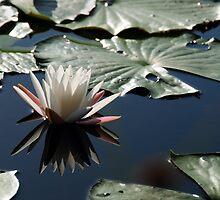 Beauty Reflected by Rebecca Cruz